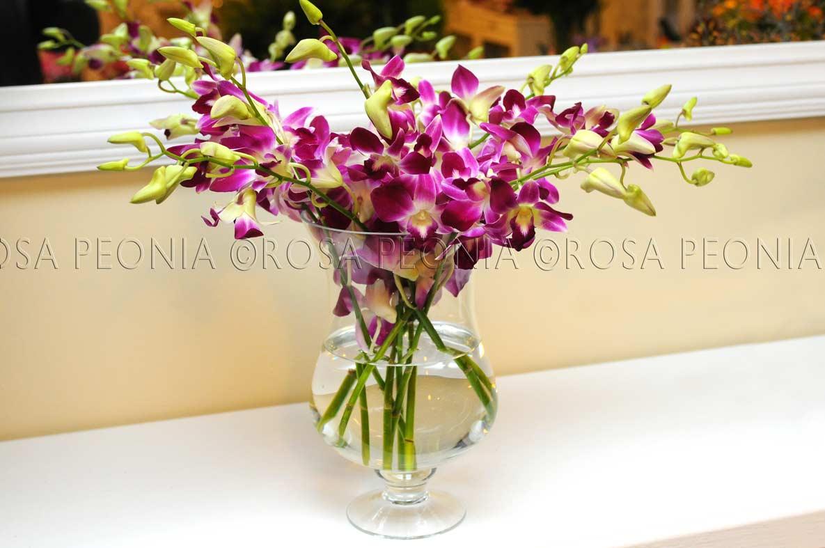 Prima e dopo le mille vite di un orchidea rosa peonia - Vaso in gres per orchidee ...