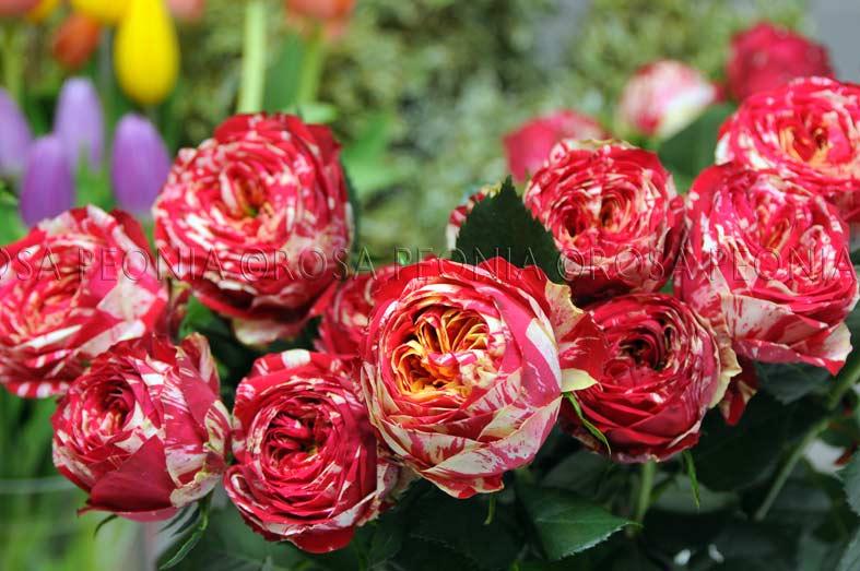 Per colorare il tempo grigio rosa peonia studio for Colorare le rose